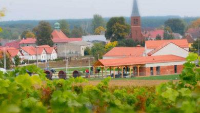 Photo of Nauka winiarstwa, agrobiznesu, produkcji roślinnej i zwierzęcej – nowy kierunek dla techników