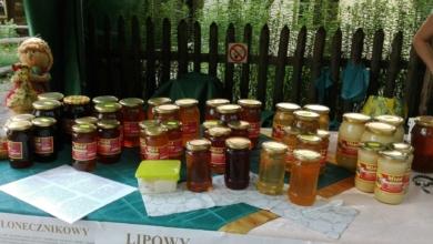 Photo of Letni weekend w Zielonej Górze: czego posłuchać, co zobaczyć? [PROGRAM IMPREZ]