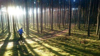 Photo of Hej ho, do lasu by się szło! Sezon na grzyby rozpoczęty!