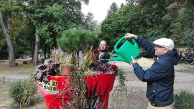 """Photo of """"Budowlanka"""" zyskała zieleń w nowoczesnej oprawie. Przed szkołą stanęła barwna donica"""