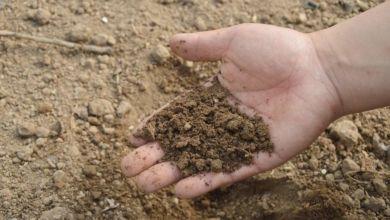 Photo of Będzie monitoring suszy w regionie. Zainwestuje w niego samorząd