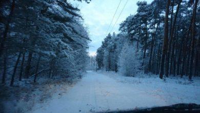 Photo of Leśne zimowe spacery – miniporadnik leśniczych, czyli jak się ubrać, aby nie zmarznąć