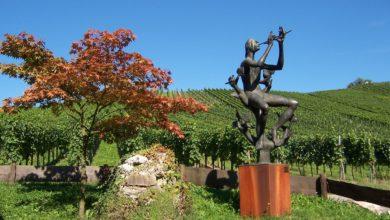 Photo of Wino, śpiew i… literatura. Motywy i tradycje winiarskie naukowym okiem