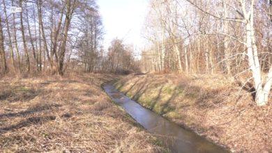 Photo of Rosik: wycinka w Dolinie Gęśnika? Fałszywy alarm