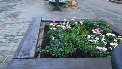 Photo of Donice i rabaty już w kwiatach. Przetrwają opady śniegu?