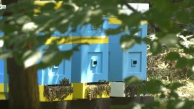 Photo of Internet i kamery pośród… pszczół. Ogród Botaniczny uczy nowocześnie!