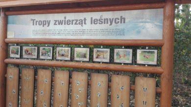 Photo of Ścieżka edukacyjna na Chynowie: ptasi zegar, leśne cymbałki, tropy zwierząt…