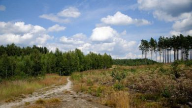 Photo of Długi spacer przed świętami? Rajd po Lesie Piastowskim