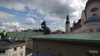 Photo of Historyczna kamienica… z kotem [Nieznana Zielona Góra]