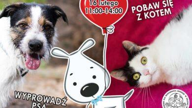 Photo of Spacery, zabawa i adopcje – wszystko z miłości do zwierzaków! Nadchodzą schroniskowe walentynki