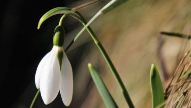 Photo of Piechotą do wiosny! PTTK organizuje kolejną wędrówkę