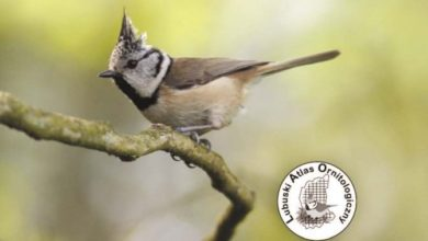 Photo of Co piszczy (lub śpiewa) w lubuskiej trawie? Podpowiadają zielonogórscy badacze ptaków!