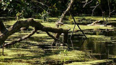 Photo of Nie siedź w domu! Wybierz się na wędrówkę po Gryżyńskim Parku Krajobrazowym!