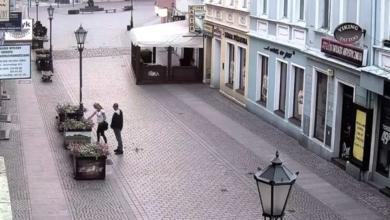 Photo of Sprawczyni dewastacji zieleni ujęta. To 42-letnia mieszkanka miasta