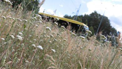 Photo of Kosić trawę w mieście czy nie? Głos eksperta