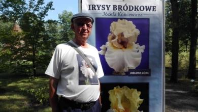 """Photo of """"Zielona Góra"""" zakwitnie w Ogrodzie Botanicznym. Będą tam irysy z prywatnej kolekcji"""