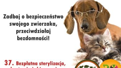 Photo of Bezpłatna sterylizacja i budki lęgowe. W Budżecie Obywatelskim są zadania na rzecz zwierząt!