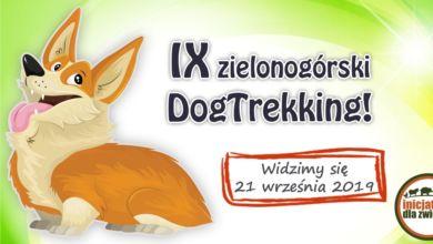 Photo of IX edycja DogTrekking. Czworonogi znów wyjdą na miasto!