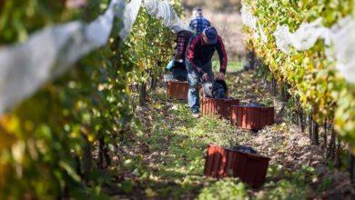Photo of Brak typowego Winobrania szansą dla lepszej promocji winiarstwa?