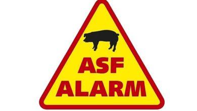 Photo of Zielona Góra w czerwonej strefie ASF. Co to oznacza?
