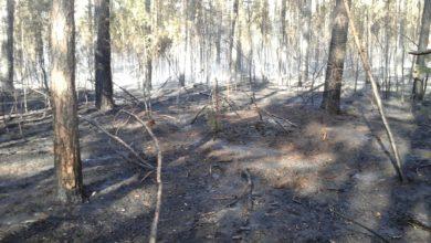 Photo of Straż o ryzyku pożarów w Lubuskiem: lasy nadal mogą zapłonąć