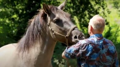 Photo of Opiekun koni z Okunina potrzebuje pomocy. Zbiórka dla Lecha Wierzbowskiego