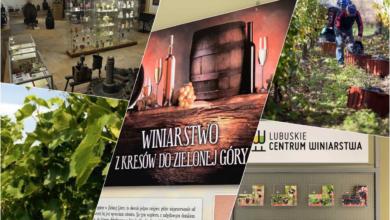 Photo of Poznajmy bliżej lokalne winiarstwo – na winnicach i w muzeum [Visit Zielona Góra]