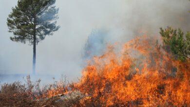 Photo of Upał daje się we znaki lasom. Jak uniknąć pożarów?