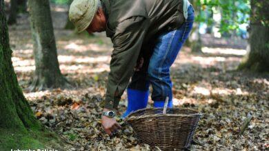 Photo of Szukając grzybów, nie zgub się w lesie. A jeśli się to stanie – reaguj!