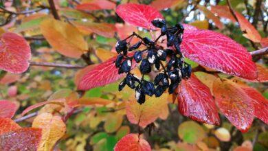 Photo of Ogród Botaniczny UZ wygląda kwitnąco! Co warto zobaczyć jesienią? [UZ Nawigator]