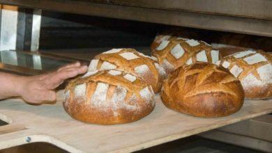 Photo of Fabryka chleba na Fabrycznej. Naucz się przygotowywać zakwas i wypiek