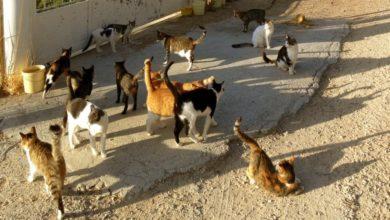 Photo of Z miłości do zwierząt. Przedwalentynkowe spacery z psami i miesiąc kota