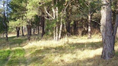 Photo of Zagubiony w lesie? Leśnicy podpowiadają, jak temu zapobiec