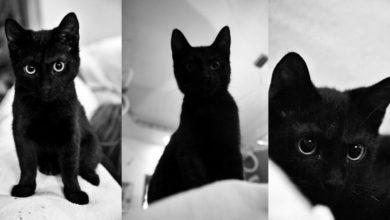 Photo of Koty będą mruczeć z zadowolenia – dzień kota i zbiórka karmy w Centrum Przyrodniczym